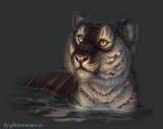 tigre4